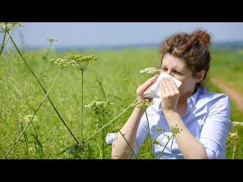 Natural remedies for allergies | Seasonal allergies | Pollen allergy 2015