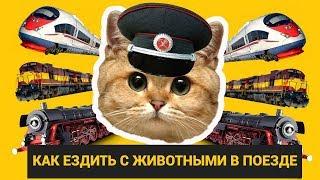 Путешествие с животными в поезде: правила и полезные советы