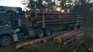 Transport Leśny holztransport Leśny włóczykij