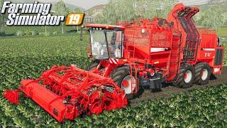 Zbieranie buraków - Farming Simulator 19 | #101