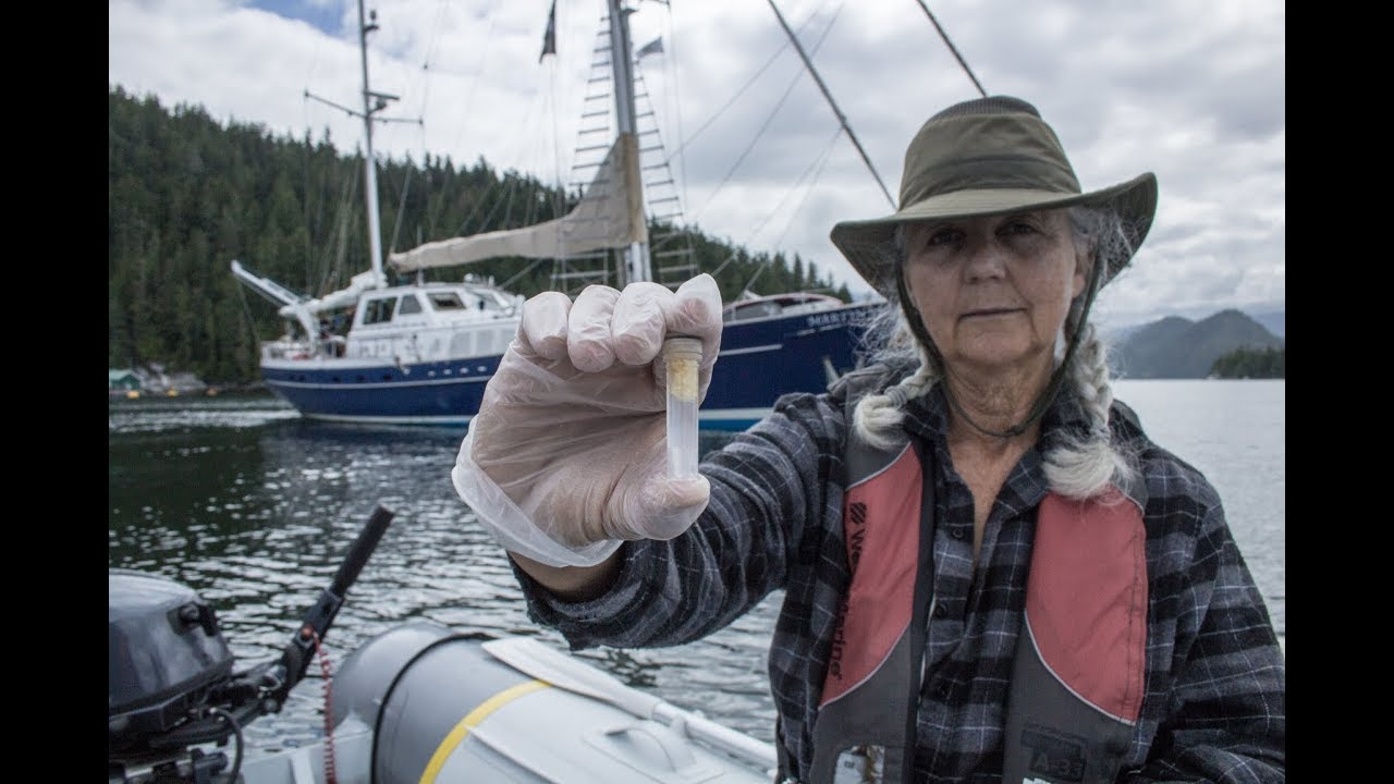 5f5b7c1a9 Salmon Farm Research Reveals Alarming Effects on BC's Ecosystem ...