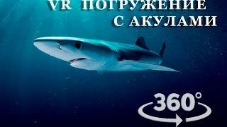 Дайвінг з акулами   VR відео 360
