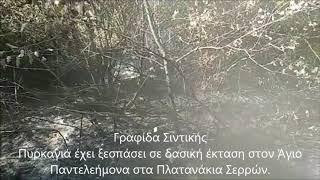 Πυρκαγιά έχει ξεσπάσει σε δασική έκταση στον Άγιο Παντελεήμονα στα Πλατανάκια 24.9.18