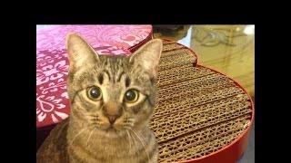 DIY Rascador De Cartón Para Gato