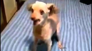 Собака Дебил