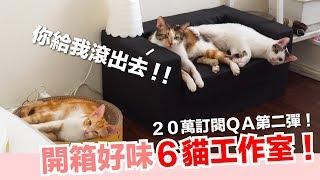 開箱6貓工作室!20萬訂閱QA續集【好味貓日常】EP26