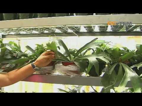 Propagacion de plantas Parte 2