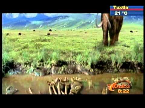 Sección Nuestra BIOSFERA:  Modelo Paleontológico Ambiental