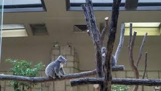 2018/08/14東山動植物園 スマホだけど可愛いので公開です.