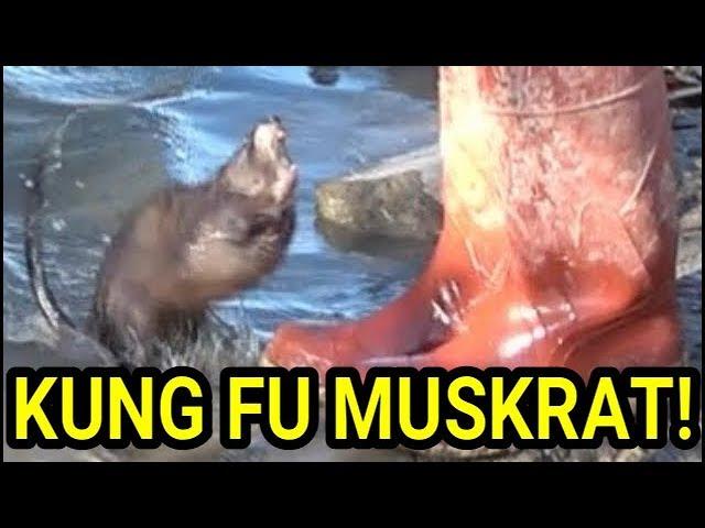 kung-fu-master-muskrat-vs-novice-mink