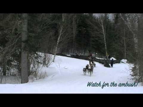 Jackman Northeast Sled Dog Championships 2011