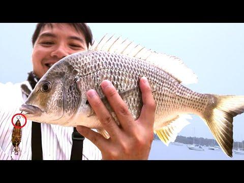 MONSTER Bream! Tips & Techniques - Sydney Harbour Fishing