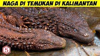 Makhluk Menyerupai NAGA di Temukan Hidup di Kalimantan