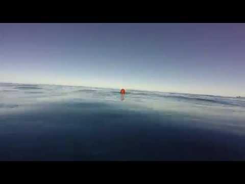 Bye Bye Float! - Spearfishing Wahoo In Baja