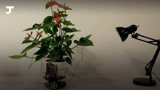 В MIT показали «растение-киборг», которое само двигается к свету вместе с горшком