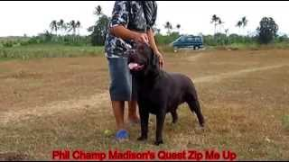 """Phil Champ Madisons Quest Zip Me Up""""zipper"""" On Stack Position"""