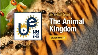 The Uncommon Engineer: The Animal Kingdom with David Hu
