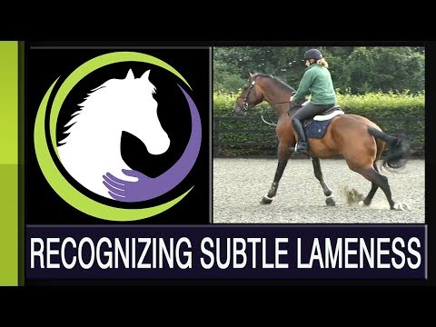 Recognizing Subtle Lameness - Part One of a Four Part Series