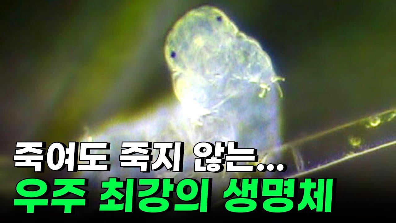 바퀴벌레보다 더 독한 괴물을 달에 수천 마리 뿌렸다. 과연 살아있을까?