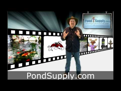 Preparing Your Pond For Fish.