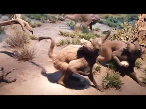 Museum of natural history - Africa