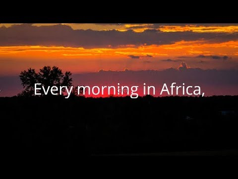 Every Morning In Africa - Daily Motivation