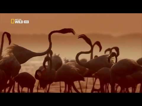 National Geogaphic Documentary - Ocean of Giants - Wildlife Animal