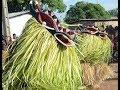 Culture bouaké le goli de bendekouassikro en attraction mp3