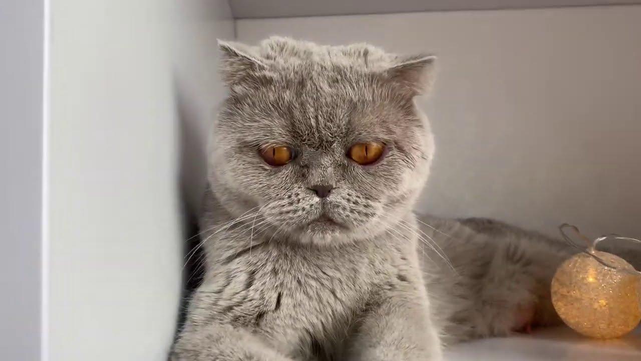 O zi din viața pisicilor?Cat de mari au crescuuut?