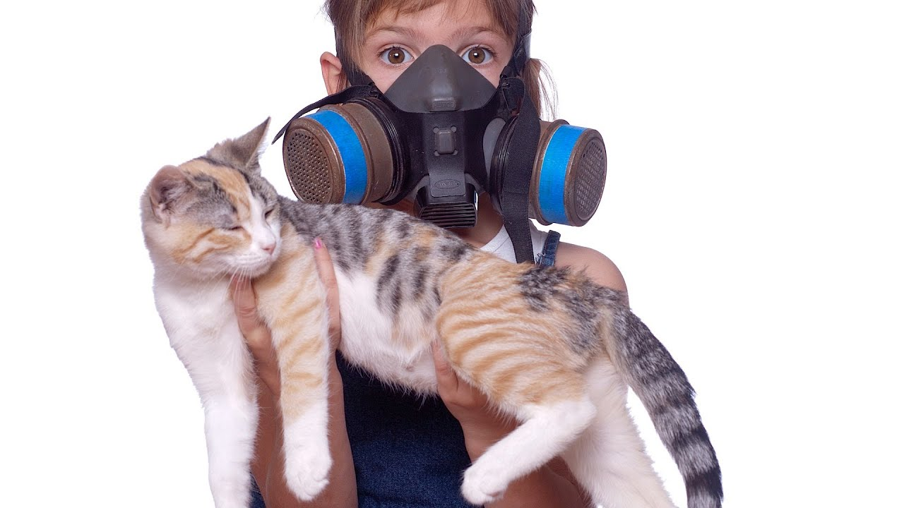 How to Reduce Cat Odor & Cat Poop Odor | Cat Care