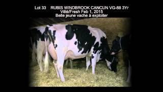 Vente Nationale 2015, plusieurs belles jeunes vaches en vente !