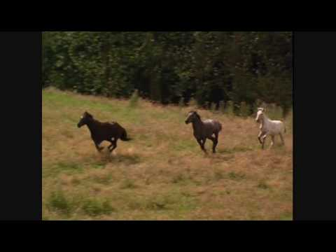 03 Gang on the Run - Black Beauty Soundtrack with Video