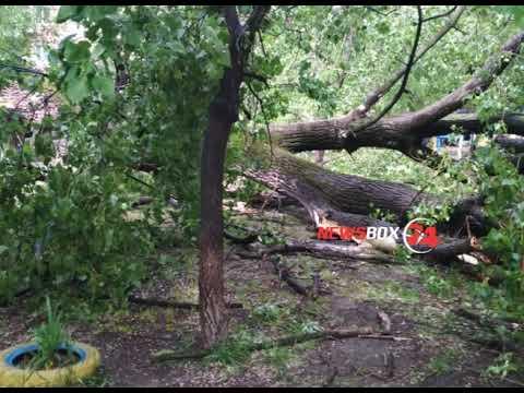 Ураганный ветер повалил дерево в Спасске Дальнем