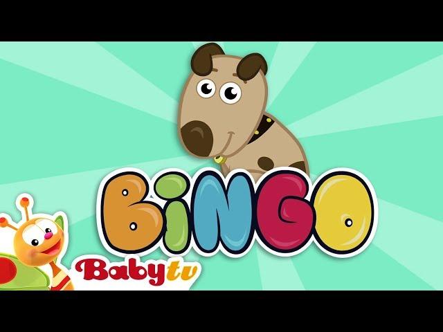 BINGO 🐶 |  Nursery Rhymes & Songs for kids | BabyTV