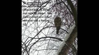 Salvation Hawk_Part#1