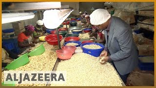 🇹🇿Tanzanian government to buy entire cashew crop to end price dispute l Al Jazeera English