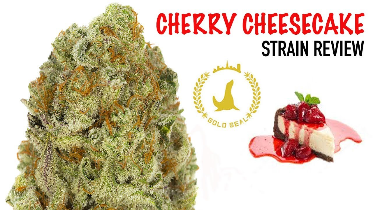 CHERRY CHEESECAKE STRAIN REVIEW
