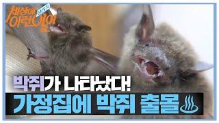 고요한 가정집 거실에 나타난 무언가는 바로 '박쥐!'ㅣ…