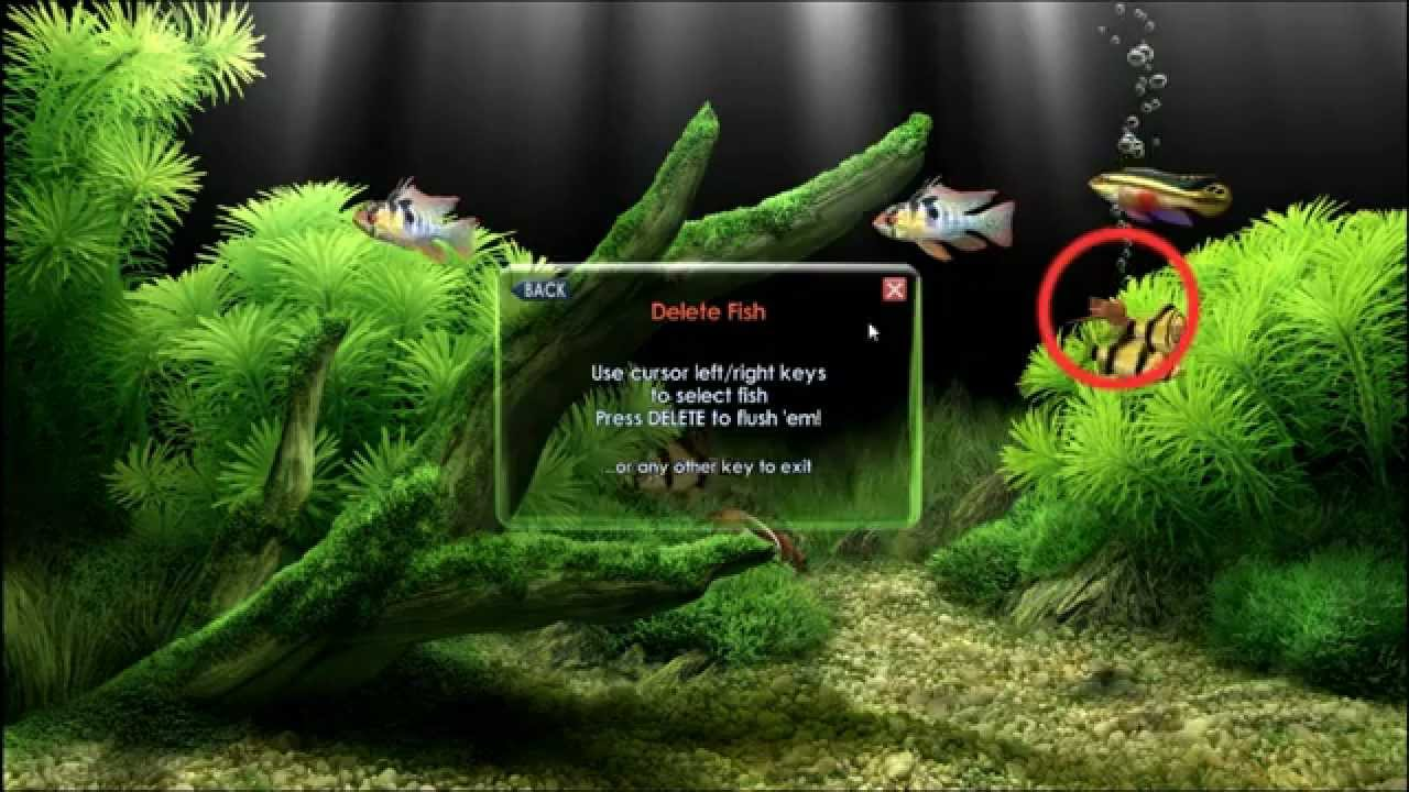 Descargar protector de pantalla de peces dreamaquarium for Protectores animados