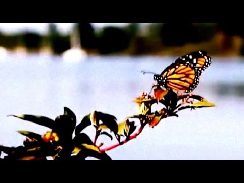 amazing technology in the future||World's Most Beautiful Butterflies Mind Blow|| amazing technology