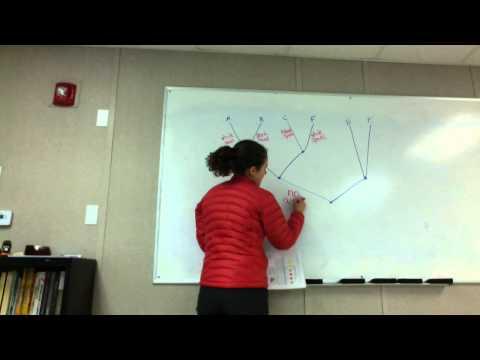 Phylogenetic Tree Explanation