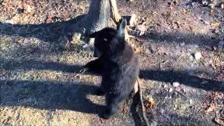 Merry Christmas, Bear Cubs