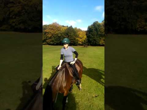 Gauntlet Canter Track