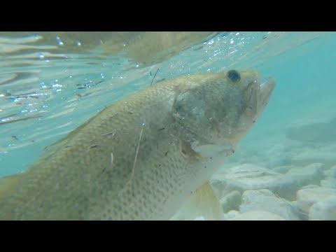 Frio River Bass Fishing Pt. #2