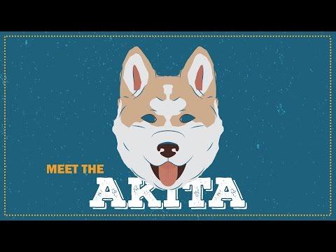 Breed Profile: The Akita