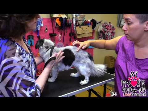 Dog Grooming - My Dog survived cancer - please be careful grooming my dog