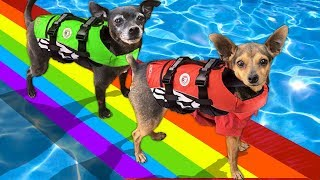 We Built a Giant Bridge Over Our Pool out of Rainbow Duct Tape! PawZam Dogs