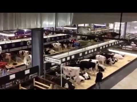 World Dairy Expo 2014 Barn 1 overview - New HOlland Pavillion