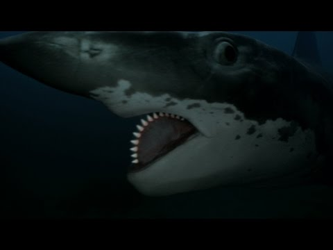 Hunting Down an Ancient 'Buzzsaw Killer': The Helicoprion