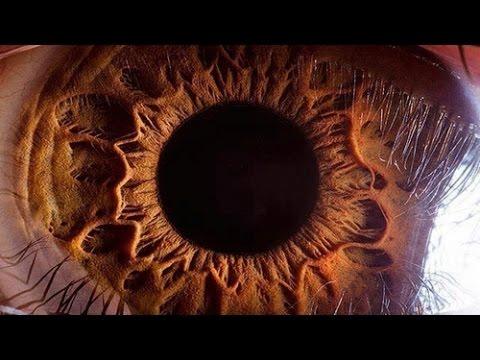 Как растут глаза у человека
